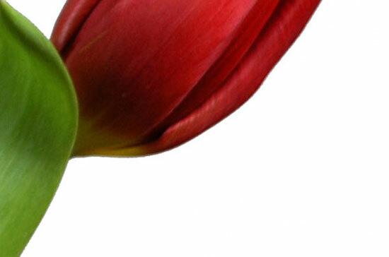 Đây là loài hoa nào? (2) - 5
