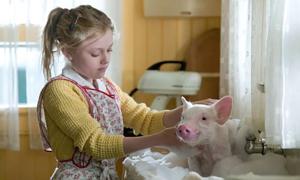 Những phim cảm động về con người và thú cưng
