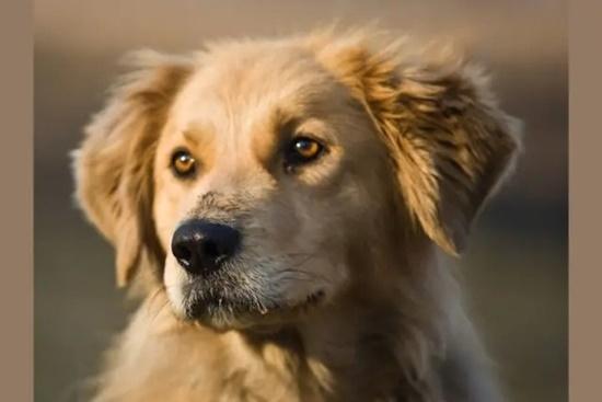 Đọ hiểu biết về cún cưng - 7