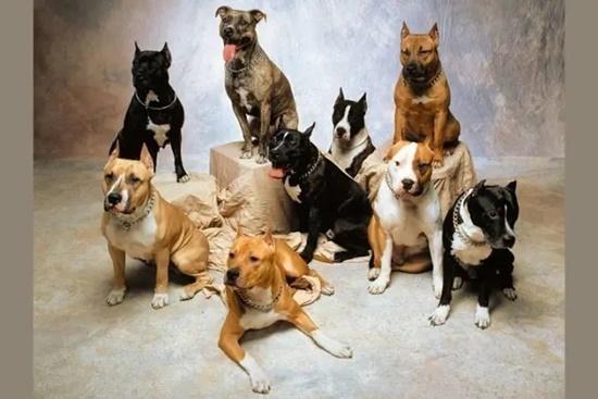 Đọ hiểu biết về cún cưng - 4