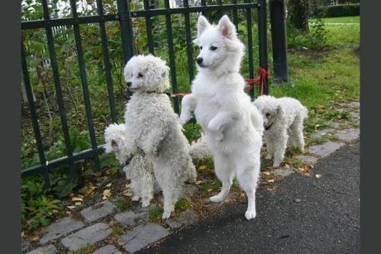 Đọ hiểu biết về cún cưng - 6