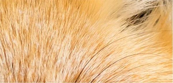 Nhìn lông đoán động vật