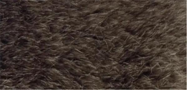 Nhìn lông đoán động vật - 6