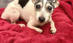 12 năm trời đi lạc, chó cưng được tìm thấy cách nhà 1.800km