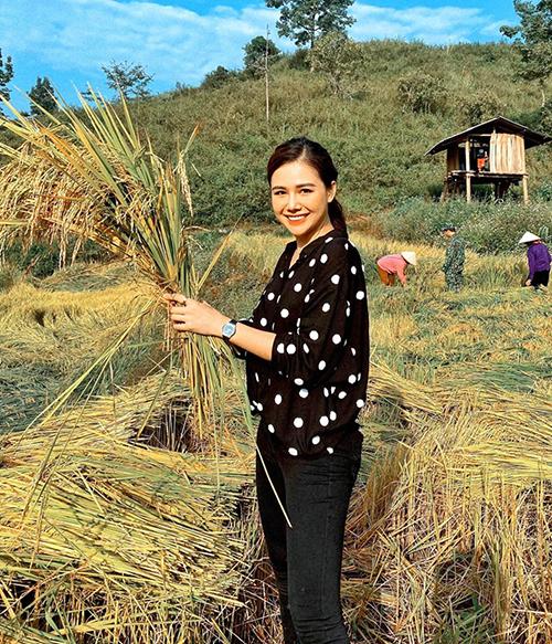 Phanh Lee trải nghiệm công việc gặt lúa.