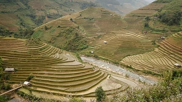Ruộng bậc thang Than Uyên ẩn mình trong khi dân cư thưa thớt thuộc tỉnh Lai Châu, Việt Nam. Phong cảnh rực rỡ nơi đây sẽ mang lại cho du khách chuyến đi tuyệt vời. Cảnh vật đặc biệt bình dị trong mùa thu hoạch chè từ tháng 9 đến tháng 11. Ảnh: CNN.