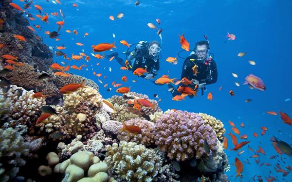 Trải nhiệm lặn biển và chèo thuyền kayak  Phú Quốc nổi tiếng là nơi có hệ sinh thái san hô sống đa dạng, dày đặc và đẹp nhất ở Việt Nam. Khi tới Phú Quốc bạn sẽ dễ dàng đặt một tour thuyền, ghe hay cano của một công ty nào đó để lặn ngắm san hô với đủ các lịch trình và giá.