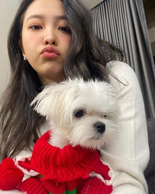 Yeri mặc áo len đỏ đậm không khí ngày lễ cho cún cưng.
