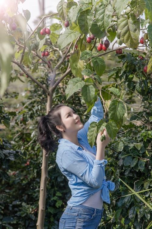 Lý Nhã Kỳ mặc quần jeans, áo thun đi hái cà chua. Nông trại của cô nằm trên một ngọn đồi, cách trung tâm TP Đà Lạt 20 km.