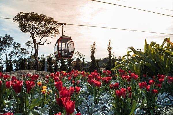 Tết sôi động tại miền Trung: Đến với miền Trung đầy nắng, du khách sẽ lạc vào không gian lễ hội hoa vốn là đặc sản Tết tại Sun World Ba Na Hills. Mùa Tết 2020, Bà Nà Hills phá kỷ lục của chính mình khi mang tới cho du khách vườn hoa tulip 1,5 triệu bông. Bên cạnh đó là vườn hồng rực rỡ với những giống hồng ngoại quyến rũ gồm đủ chủng loại, xuất xứ từ Âu châu. Lễ hội hoa Sun World Ba Na Hills như gom cả mùa xuân về núi Chúa, với chủ đề Xứ sở muôn hoa, diễn ra từ ngày 20/1 (tức 26 Tết) và kéo dài tới 30/3. Hòa nhịp cùng không gian triệu hoa ấy, các nghệ sĩ châu Âu trong trang phục rực rỡ sắc màu sẽ mang đến màn trình diễn mãn nhãn, kể với du khách câu chuyện về các loài hoa thông qua những show nhạc kịch tưng bừng trong các khung giờ 10h - 15h, tại sân khấu Club và sân khấu Vườn Hoa.