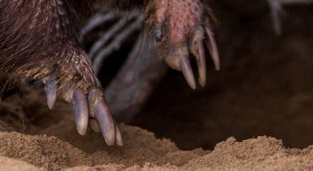 Đoán động vật qua... móng vuốt (2)