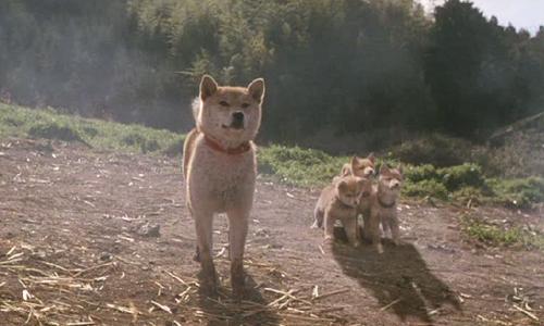 Ở nhà trốn dịch xem gì: Khóc hết nước mắt với 4 phim về cún cưng - 2