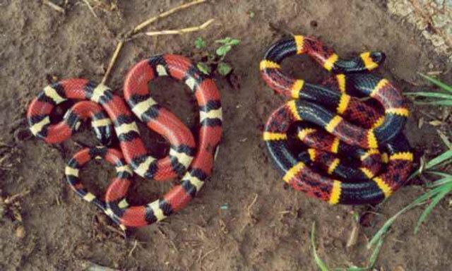 Con rắn nào có nọc độc? - 7