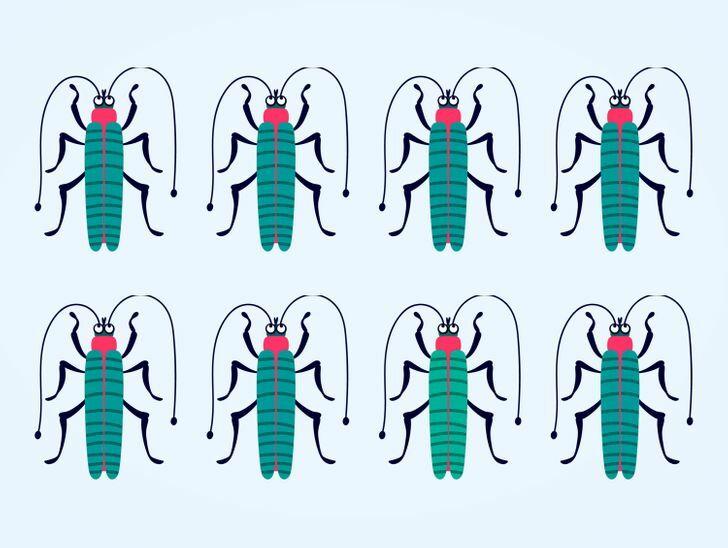 Soi kính lúp tìm con bọ có màu sắc chẳng giống ai (2) - 2