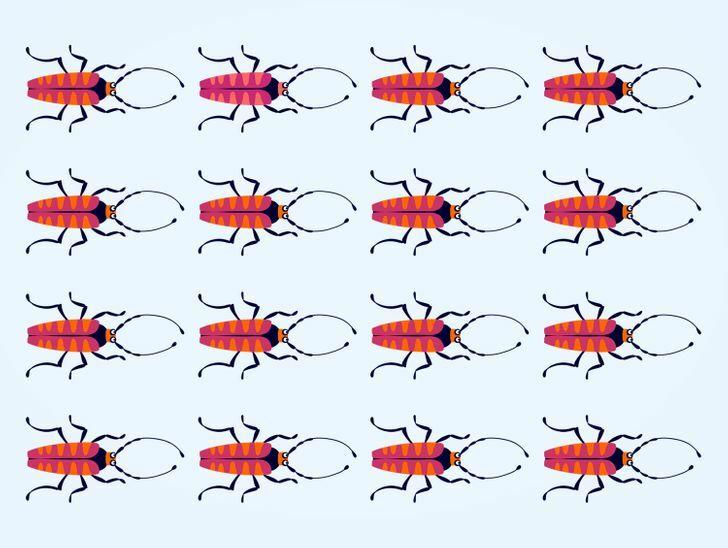 Soi kính lúp tìm con bọ có màu sắc chẳng giống ai (2) - 12