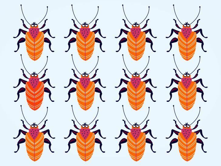 Soi kính lúp tìm con bọ có màu sắc chẳng giống ai (2)