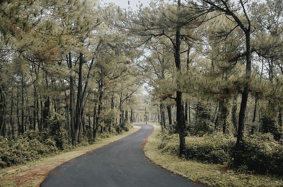Cung đường uốn lượn ở đồi Vọng Cảnh thu hút nhiều nhiếp ảnh gia, người trẻ hẹn hò và tình nhân chụp ảnh cưới. Những hàng thông xanh hai bên đường phủ bóng mát, mang vẻ đẹp tự nhiên, hoang sơ.