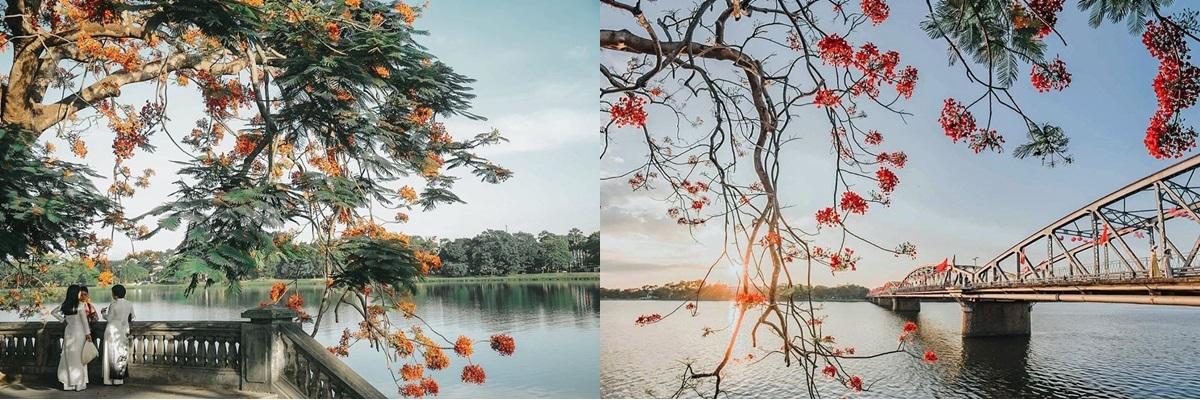 Gốc phượng =dưới chân cầu Trường Tiền ở bờ Nam sông Hương là nơi lý tưởng để ghi lại những góc ảnh đẹp hoặc ngắm sông nước hữu tình, cảnh sắc nên thơ.