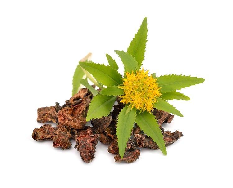 Cây rễ vàng có thể cải thiện cả về thể chất và năng lượng tinh thần, chống lại các tác động tiêu cực của căng thẳng.