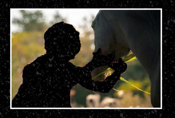 Đoán phim Hàn qua cái bóng của cặp đôi (3)