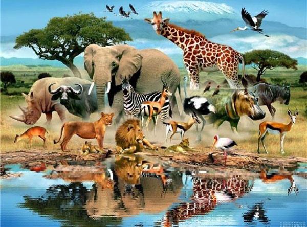 Con vật nào nhịn khát giỏi nhất? - 1