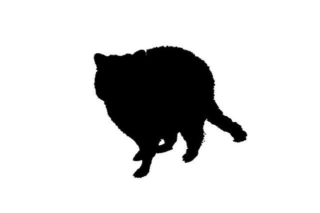 Nhìn bóng đoán con vật bằng tiếng Anh (2) - 11