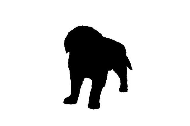 Nhìn bóng đoán con vật bằng tiếng Anh (2) - 1