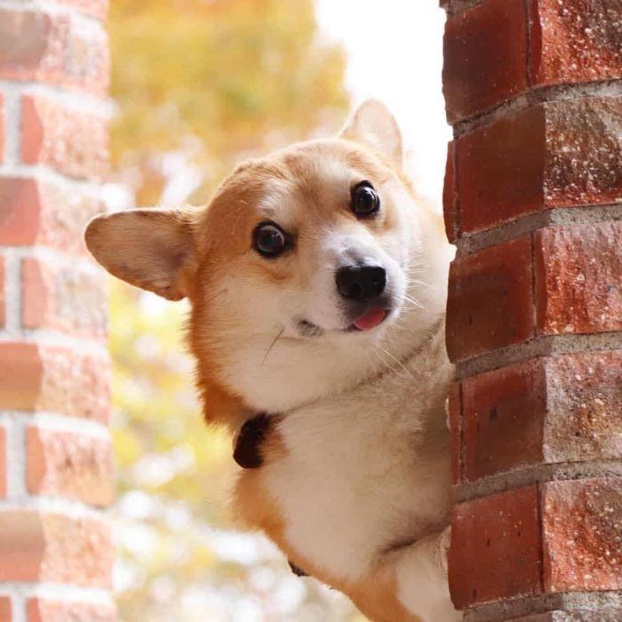 Chú chó đáng yêu mang lại niềm vui cho mọi người.