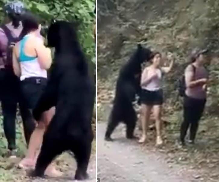 Cô gái phản ứng bình tĩnh khi bị gấu tiếp cận.