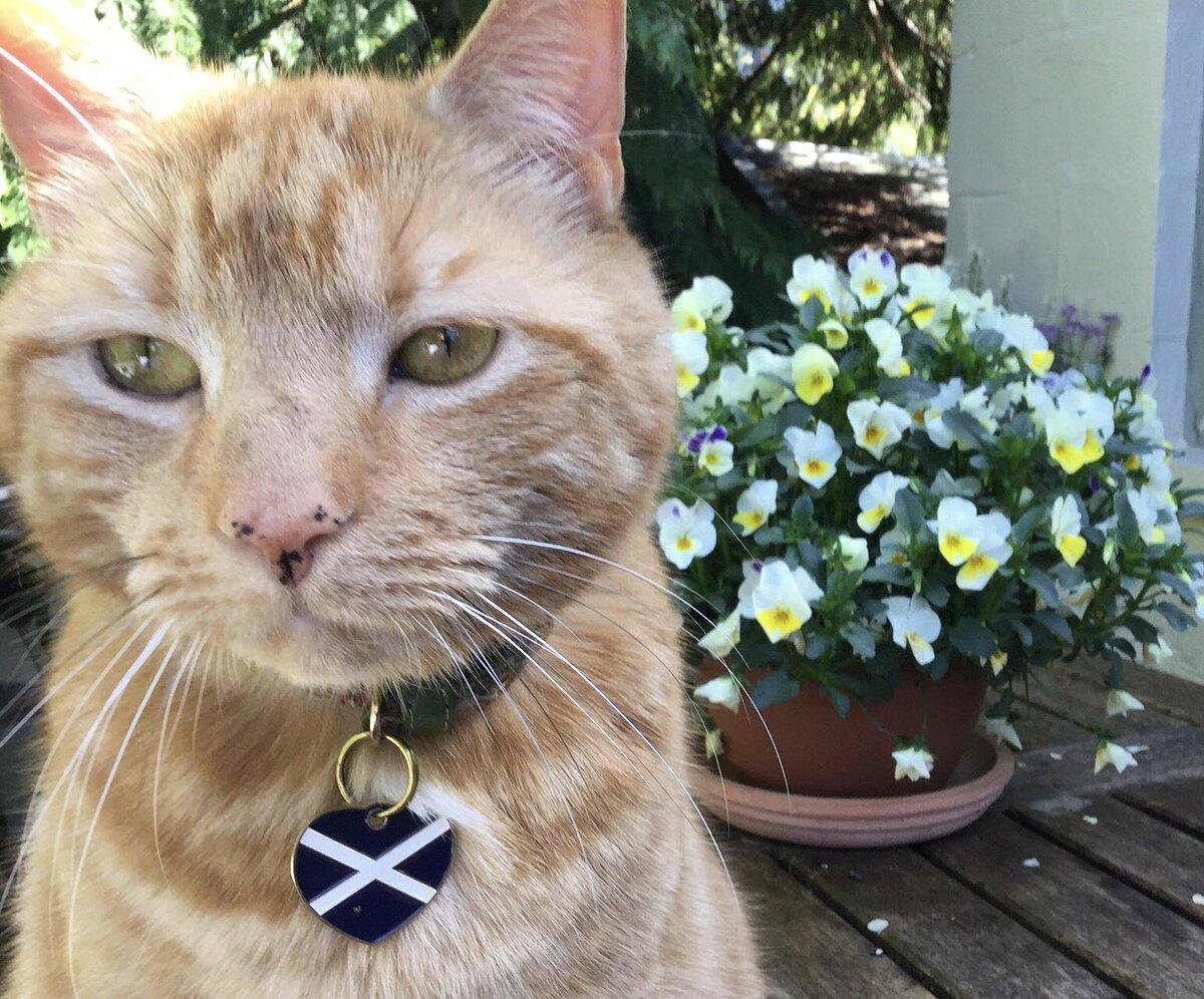 Chú mèo Rojo của nghị sĩ John Nicolson.