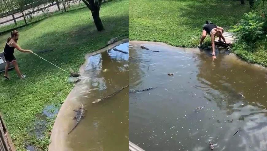 Người mẹ cố đánh lạc hướng những con cá sấu để vớt chiếc ví.
