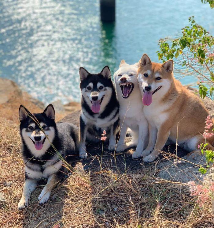 Ai cũng có đứa bạn thích phá game như chú chó Shiba này - 20