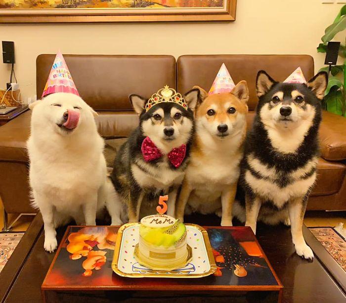 Ai cũng có đứa bạn thích phá game như chú chó Shiba này - 10