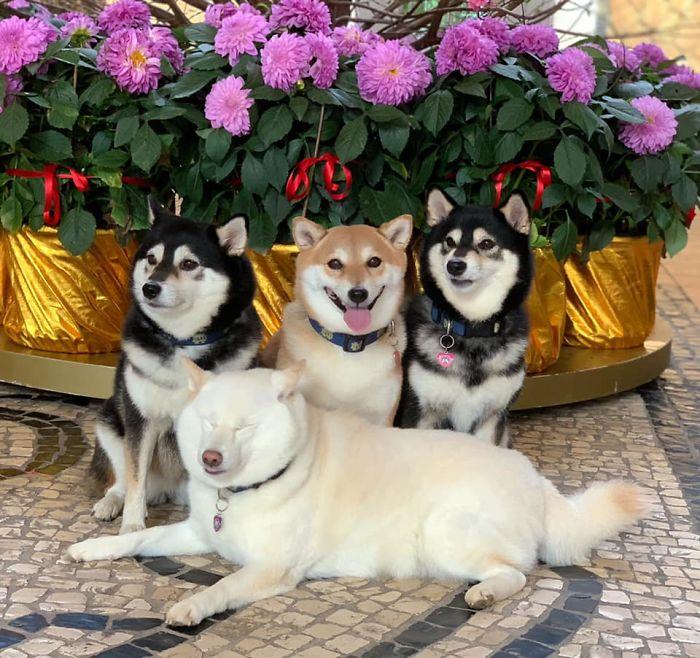 Ai cũng có đứa bạn thích phá game như chú chó Shiba này - 16