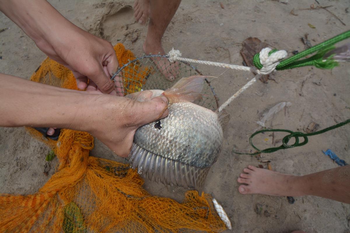 Các loại cá nước ngọt và nước lợ như rô phi, cá đối, cá lóc, ghẹ... bị mắc kẹt ven bờ, được người dân thả rớ, dùng lưới để bắt.
