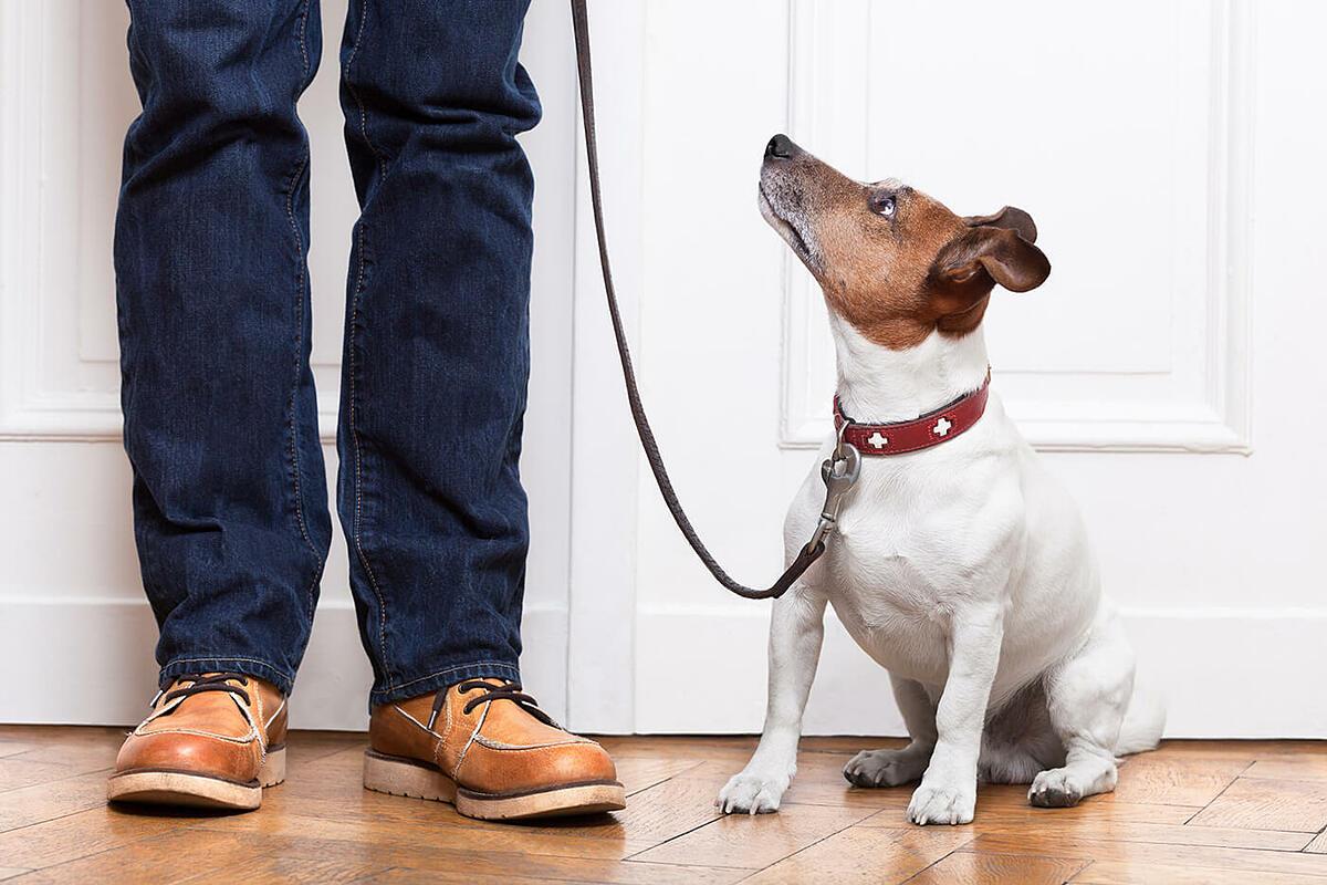 9 cách 'pose dáng' không thể bỏ lỡ với thú cưng - 17