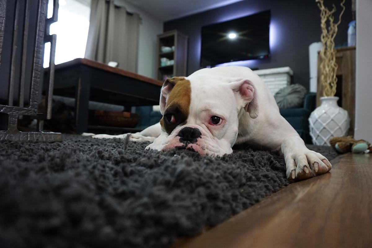 Tại sao khách sạn dành cho cả chủ lẫn pet ngày càng được ưa chuộng? - 1