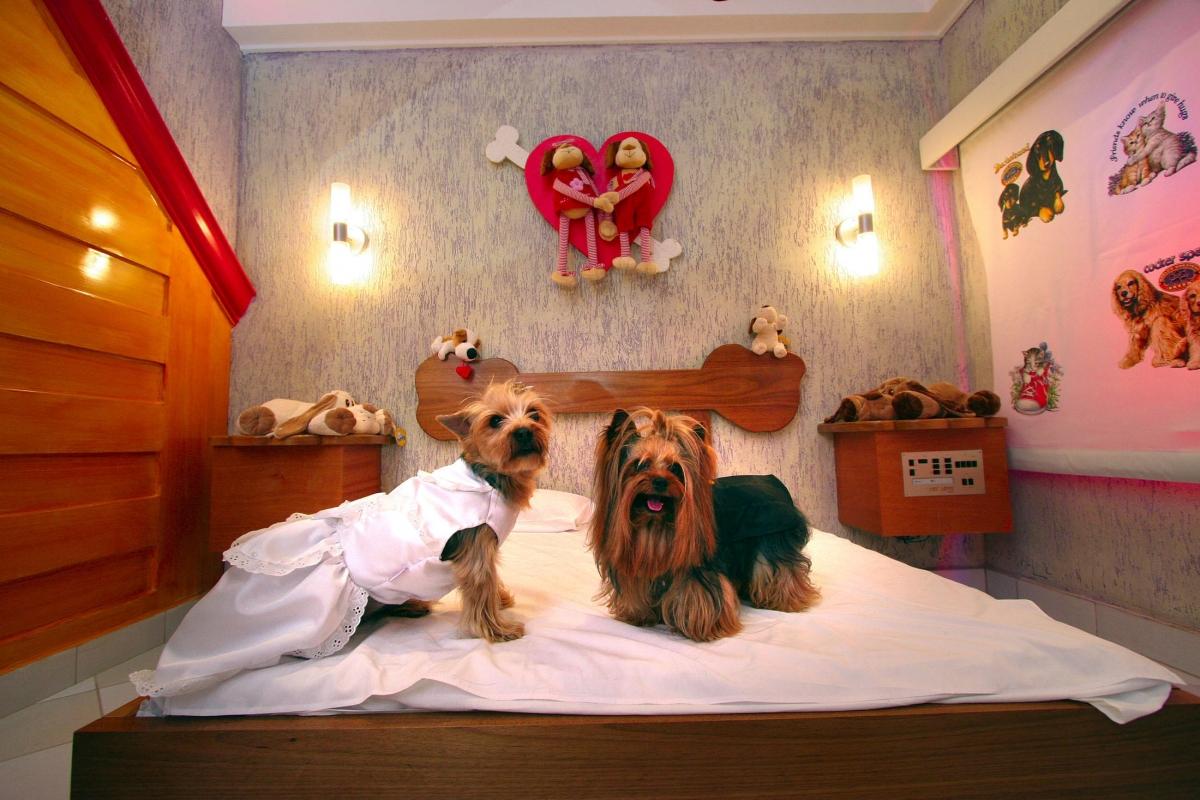 Một căn phòng tại khách sạn nhận giữ chó mèo tại Brazil.