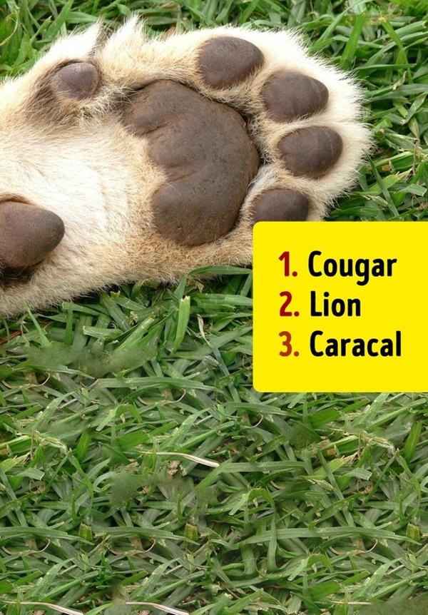 Bạn có biết đây là con vật nào khi chỉ nhìn chân nó? - 1