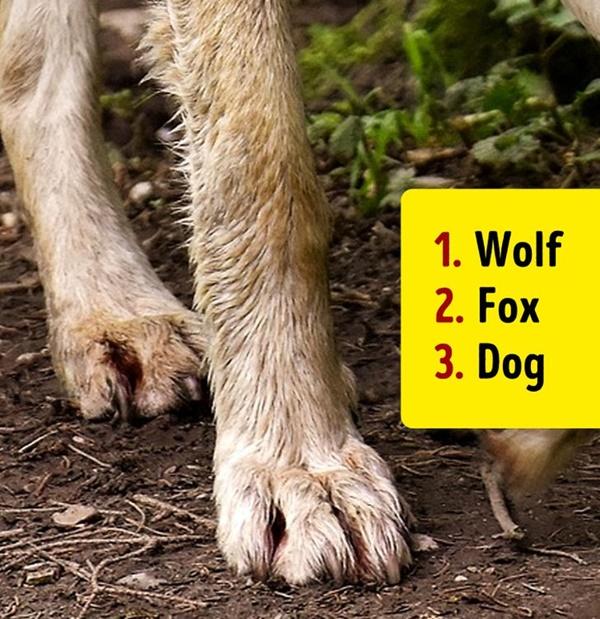 Bạn có biết đây là con vật nào khi chỉ nhìn chân nó? - 19