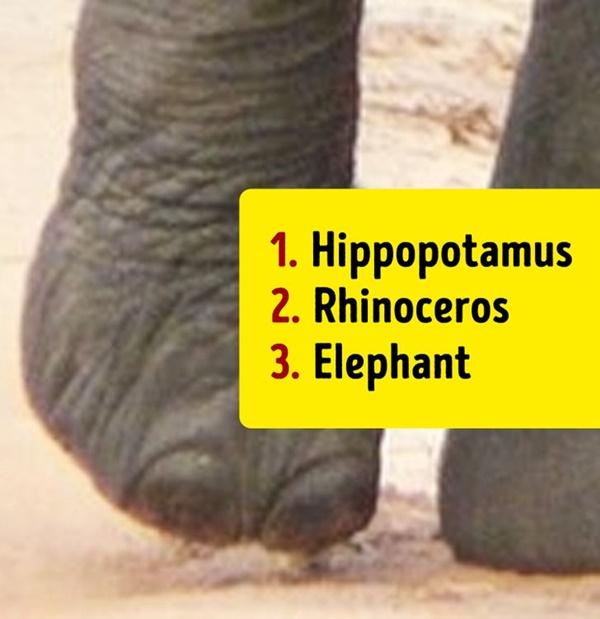 Bạn có biết đây là con vật nào khi chỉ nhìn chân nó? - 5