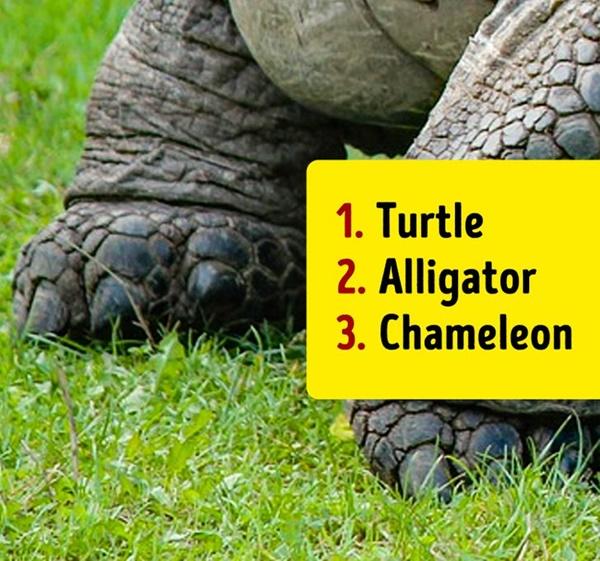 Bạn có biết đây là con vật nào khi chỉ nhìn chân nó? - 9