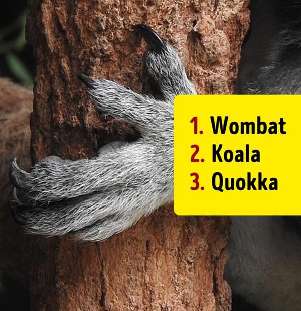 Bạn có biết đây là con vật nào khi chỉ nhìn chân nó? - 13