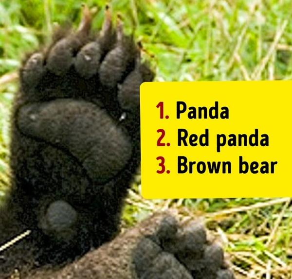 Bạn có biết đây là con vật nào khi chỉ nhìn chân nó? - 15