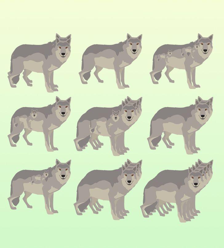 Bạn có đếm được số con vật dù bị đánh lừa thị giác? - 1