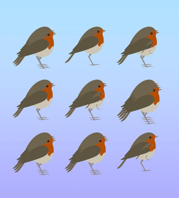 Bạn có đếm được số con vật dù bị đánh lừa thị giác? - 5