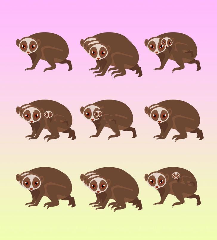 Bạn có đếm được số con vật dù bị đánh lừa thị giác? - 9