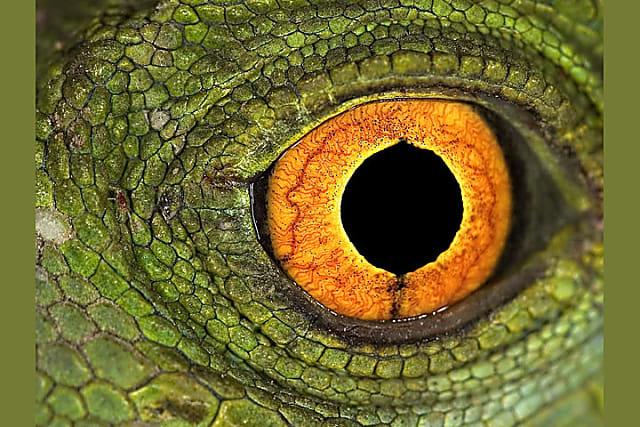 Nhìn mắt nhận biết con vật gì - 1