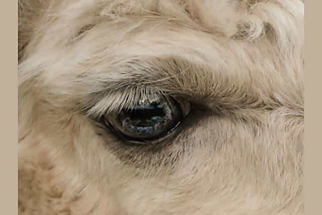 Nhìn mắt nhận biết con vật gì - 19