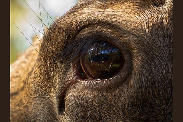 Nhìn mắt nhận biết con vật gì - 5